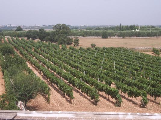 panoramica_vigna